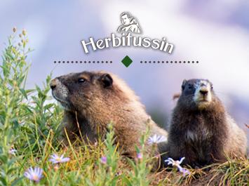 """Научете всичко за мармотите – най-чаровните """"домакини"""" на алпийските склонове!"""
